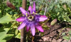 garden first summer 030