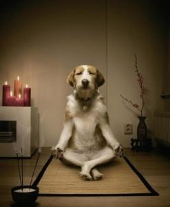 Zen-Dog