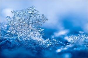 snowflakes23