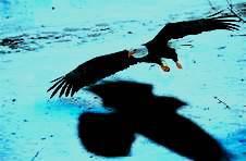 eagles-shadow-2