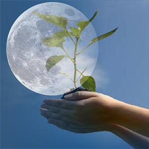 gardening-moon