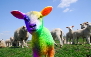 rainbow-sheep