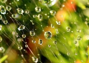 spiderweb4