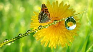 rain-drop-nature-butterfly-hd-149293