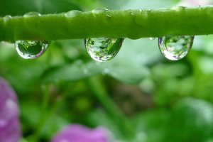 raindrop_3_by_styloooo-d3hvar5