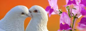 new-love-dove-tarot-logo1