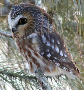 400xNxowl-cute.jpg.pagespeed.ic.4v1ya_pPKn