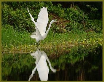 cranes-1-2